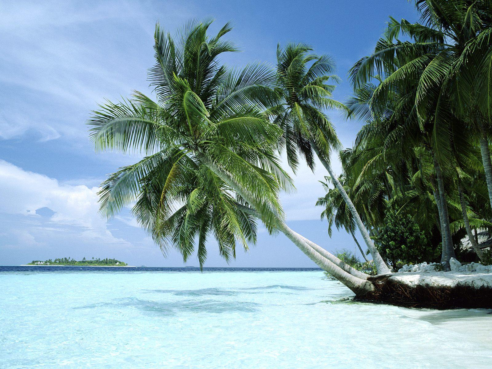 desert-island-1.jpg